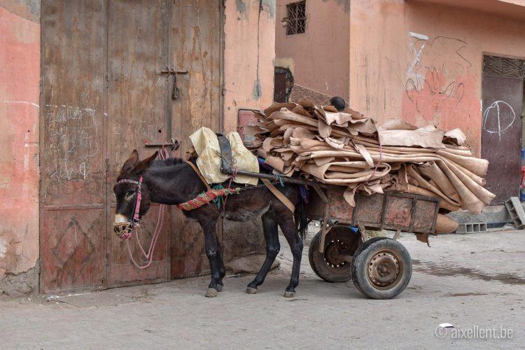 Marrakesh - Tanneries (donkey)