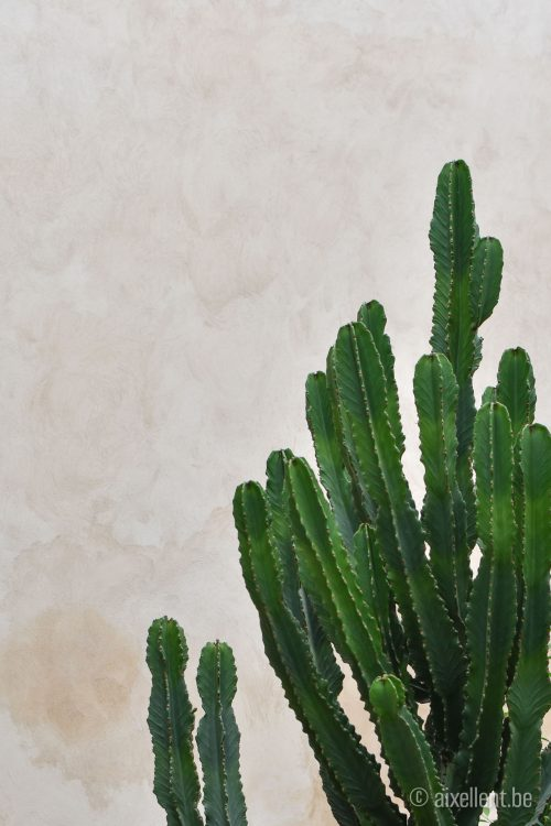 Marrakesh - Jardin Secret