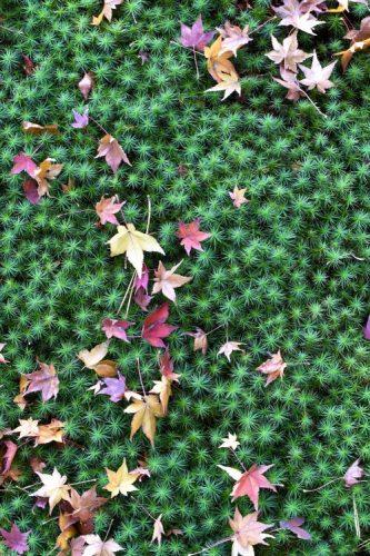 NARA Yoshiki-en Garden