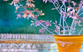Gallery/artwork - MAJORELLE - Marrakech