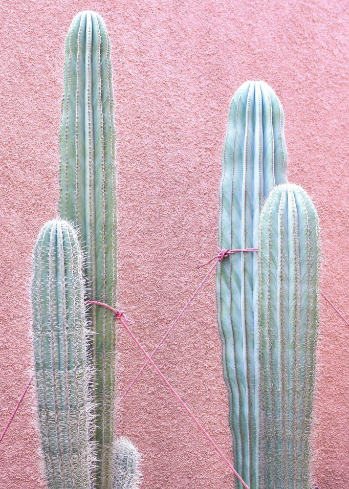 Gallery/artwork - TIED - Marrakech